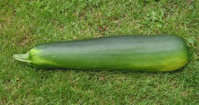 Is Courgette Gezond